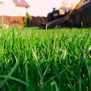 Rasenfläche aus der Froschperspektive